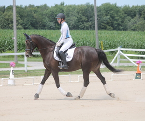 dressage and horses image