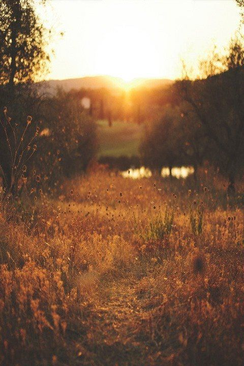nature, beautiful, and sun image