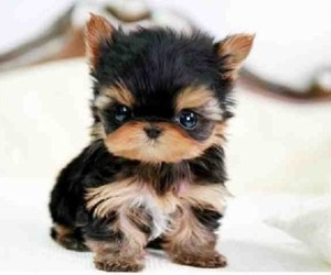 puppy and small image