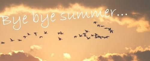 article, bye, and summer image