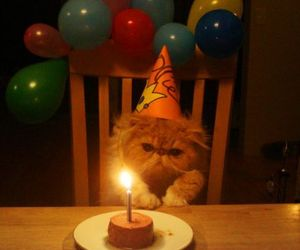cat, birthday, and funny image