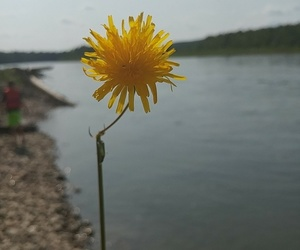 beach, nature, and dandelion image