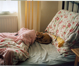 cat, bed, and photography image