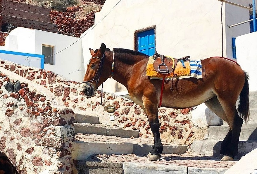 article, Greece, and horse image