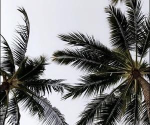 bali, holiday, and palm image