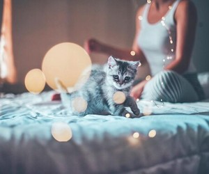 cat, light, and cute image