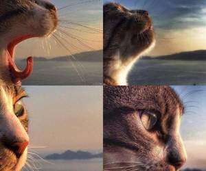 animal, atardecer, and cat image