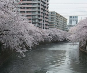 pale, river, and japan image