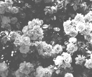 24 images about black and white rose aesthetic on we heart it see