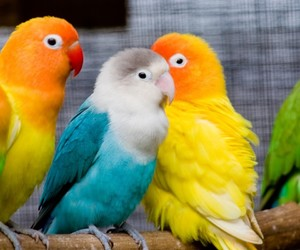 bird, blue, and colorful image