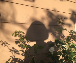 shadow, aesthetic, and flowers image