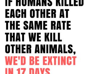 animal cruelty, animals, and food image