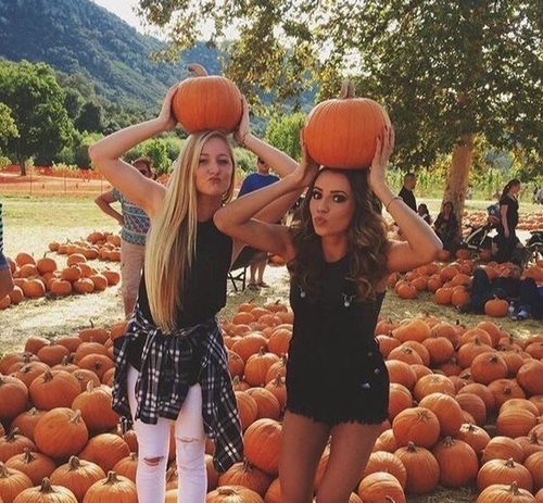 pumpkin, autumn, and friends image