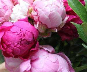 beautiful, bouquets, and pink peonies image