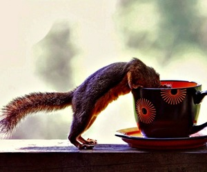 animals, baby, and coffe image