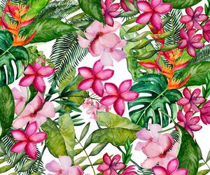Aloha, background, and bloom image