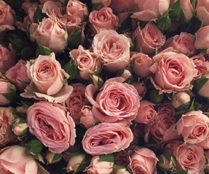 background, rose, and pink image