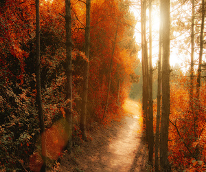 fall, forest, and leaves image