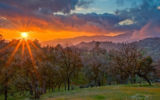 article and elsendero image