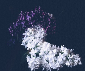 beauty, flowers, and Darkness image