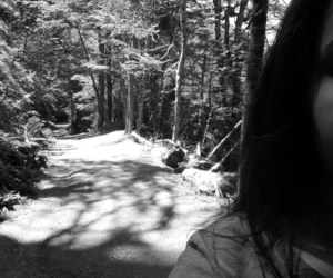 black and white, woods, and nature image