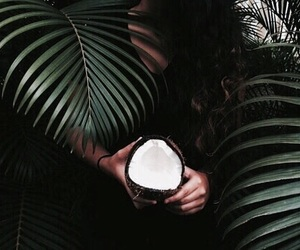 coco, palmera, and coconut image