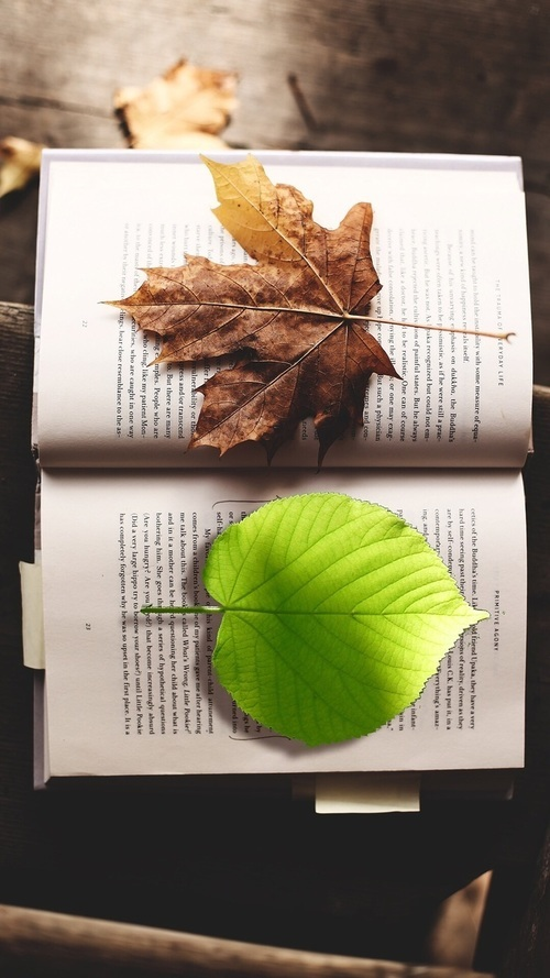 book and leaves image