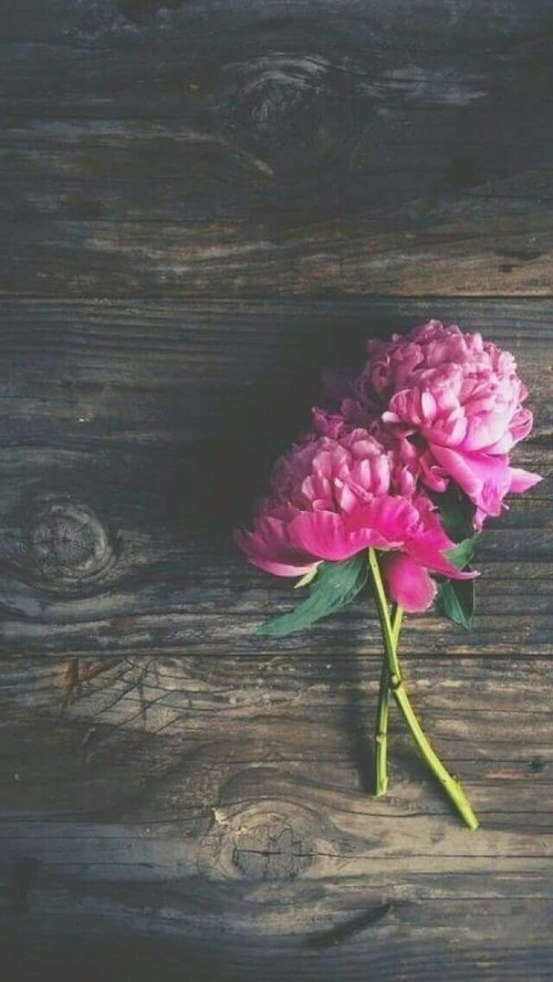 flowers, pink, and simple image