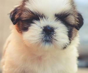 dog, love, and tatlış image