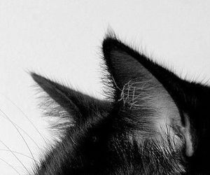 black, cat, and ears image