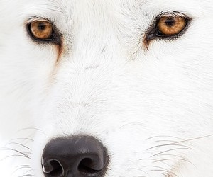 animals, white, and tiere image