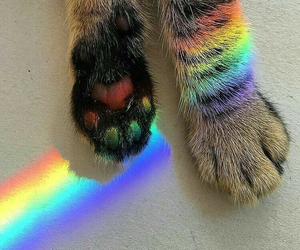 beautiful, cat, and paw print image
