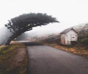 house, nature, and tree image