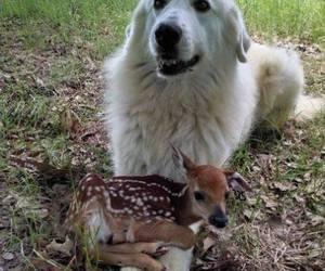 cute animals, dog, and doe deer image