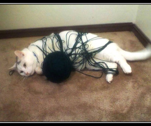 cat, string, and ball of string image