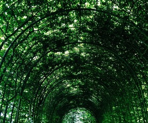 gardens, ivy, and green image