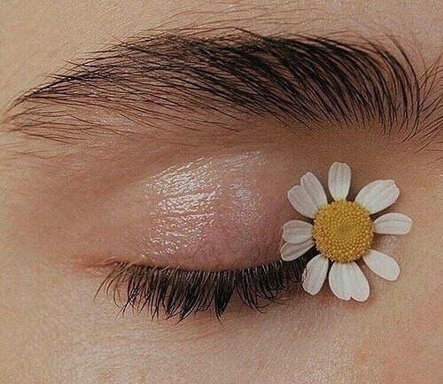 flowers, eye, and photography image