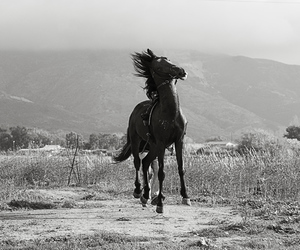 animals, horses, and black and white image