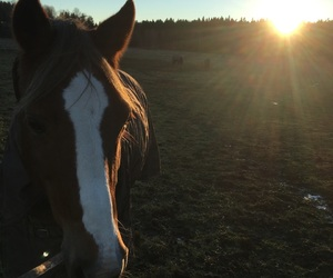 horses, summer, and sunset image