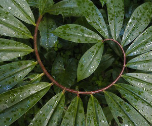nature, green, and plants image