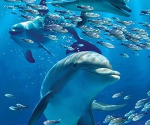 beautiful, dolphins, and sea image