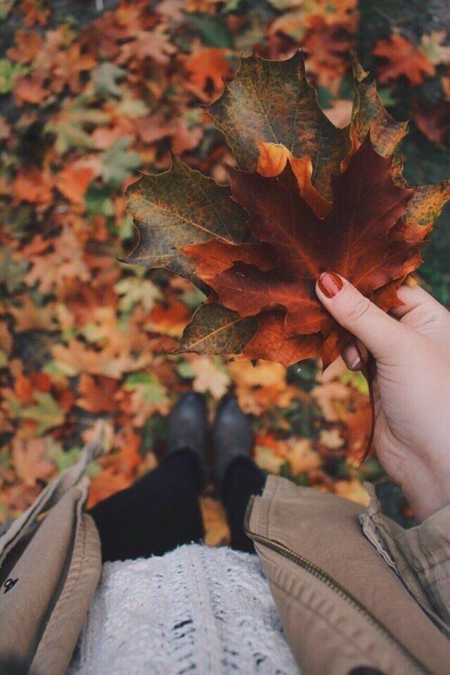 autumn, fall, and autumn vibes image