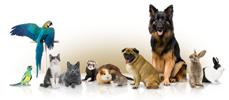 animals, cat, and article image
