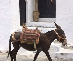 animals, lindos, and architecture image