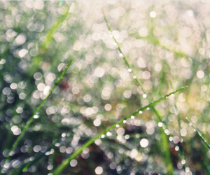 drops, gras, and summer image