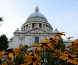 flowers, london, and photo image