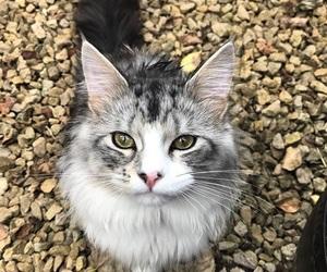 cat, milo, and cute image