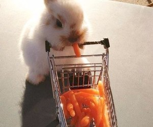 carrots, rabbit, and cute animals image