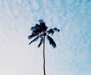 sky, palm trees, and beach image