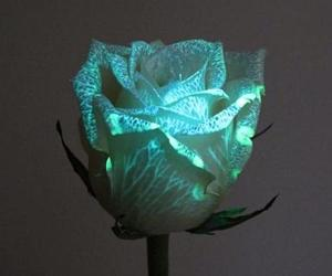 rose, flowers, and glow image